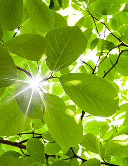 Cognex environmental-policies sunny leaves