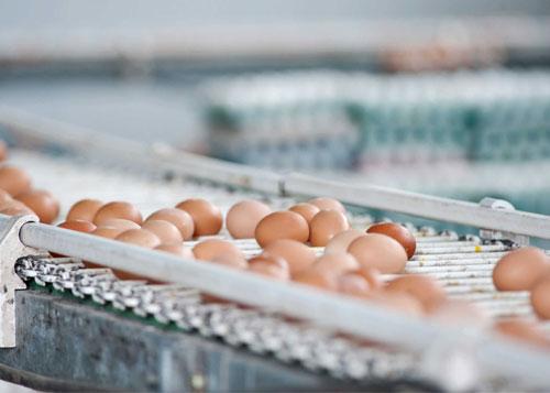 brown eggs on a metal roller conveyor